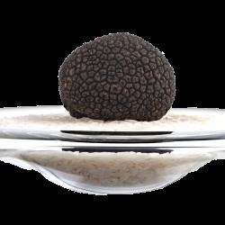 La Truffe Noire fraîche en 100g