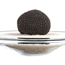 La Truffe Noire fraîche en 250g