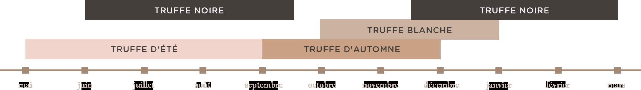 frise truffes